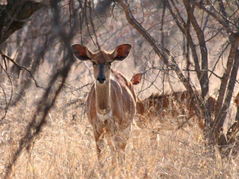Rooibos Lodge Wildlife